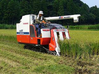 Nền nông nghiệp Nhật Bản và những điều thú vị