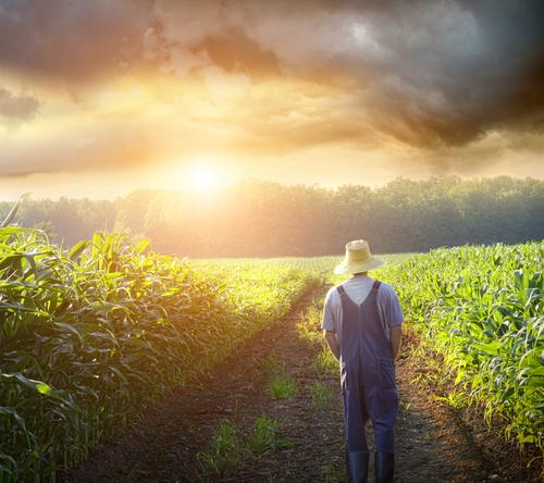 Vì sao ngành nông nghiệp Mỹ đứng hàng đầu thế giới?