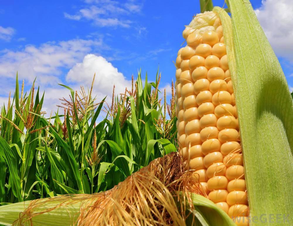 Kết quả hình ảnh cho nông nghiệp thế giới