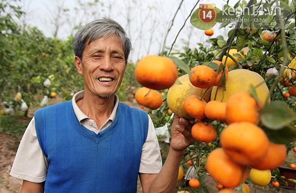 Một cây cho ra 5 loại quả khác nhau